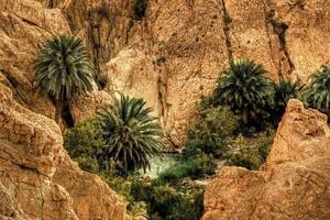Tunisien moutain oasis foto