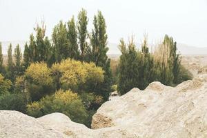 blekt foto av en oas i öknen