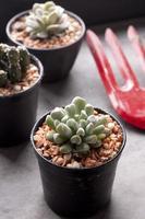 kaktus i krukor