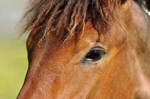 hästar öga
