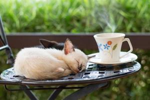 kattkafé, söt kattunge som sover på en stol foto