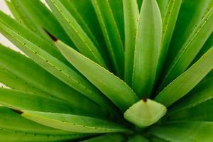 grön abstrakt natur bakgrund foto