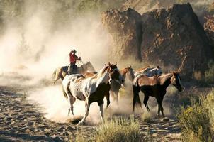cowboy drömmar foto