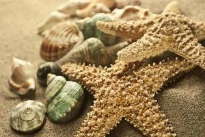 sand sjöstjärna foto