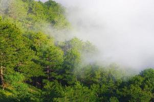 dimmig skog foto