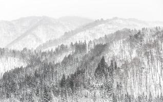 skog snöfall foto