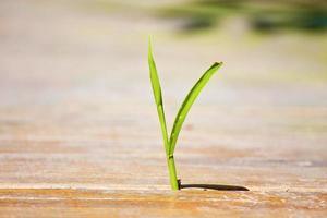 tuff växt foto