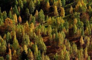 färgglad skog