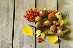 skogsvampar foto