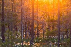 skog soluppgång foto
