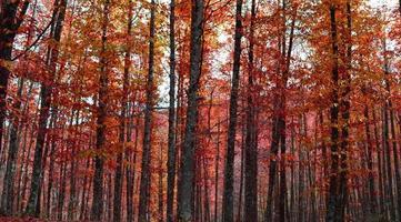 aumntonal skog foto