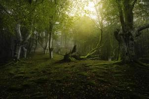 djup skog foto