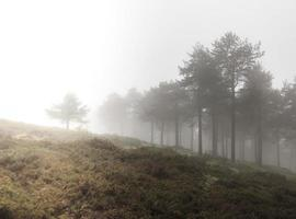 dimmig skog
