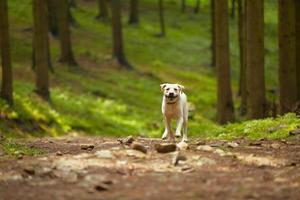 hund i skogen foto