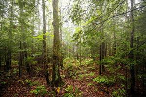 lugn skog foto