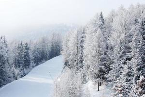 skog i snö foto