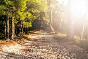 gångväg i skogen foto