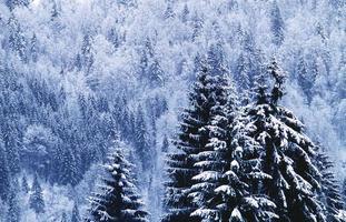 svart skog / schwarzwald foto