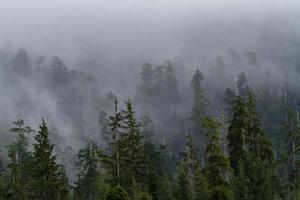 dimmig morgonskog foto