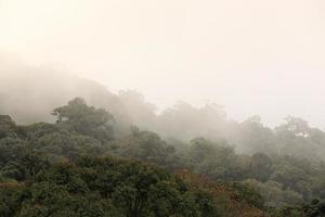 skog i dimman foto