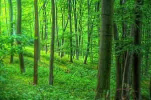 djupt inne i skogen
