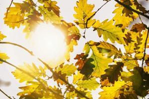 löv i höstskogen foto