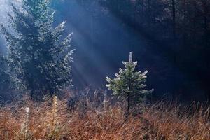 solljus i höst skog foto