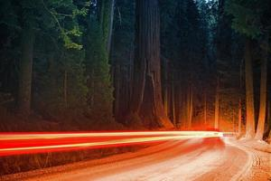 skogstrafik på natten