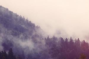 dimma i skogen foto