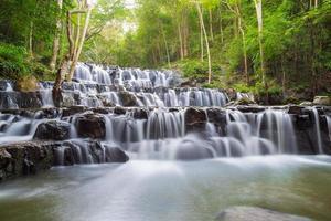 vacker djup skog vattenfall foto