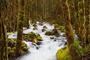 bäck som flyter genom skogen foto