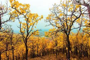 skog berg foto