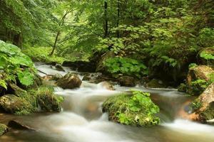 floden rinner genom skogen