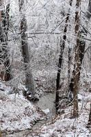 frusen skog foto