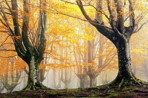 magisk skog på hösten foto