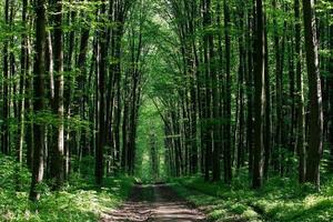 vacker grön skog foto