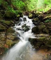 underbart skogsvattenfall
