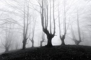 skog med läskiga träd foto