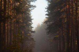 morgon i skogen foto