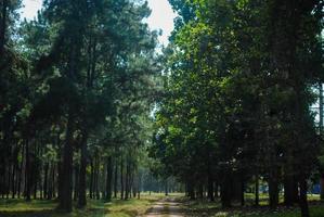 vacker grön skog i naturen. foto