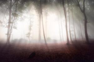 starkt ljus in i dimmig skog foto