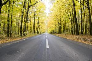 väg i skogen foto