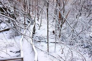 snöig skog landskap illinois foto
