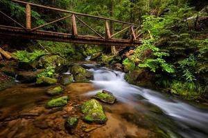 vackert vattenfall i skogen foto