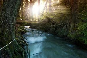 solljus i skogen foto