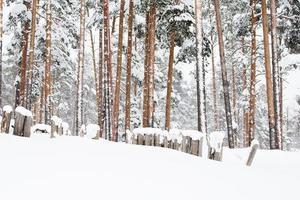 rysk vinterskog i snö