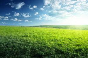 fält av vårgräs och skog foto