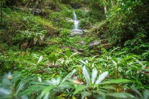 vattenfall i den tropiska skogen foto