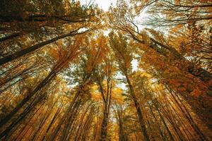 färgglada höstträd i skogen foto