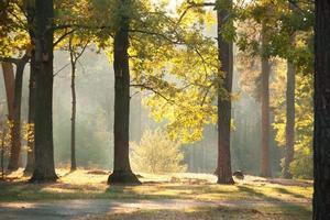 höstskog i solljus foto